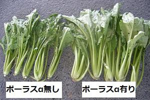 収穫物の比較