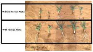 Increased crop fresh weight 88%